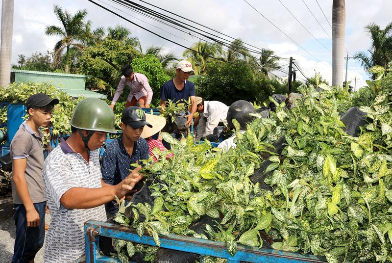 Sản xuất cây giống là một trong những dự án được cấp vốn từ CFAF. Ảnh: C.Trúc