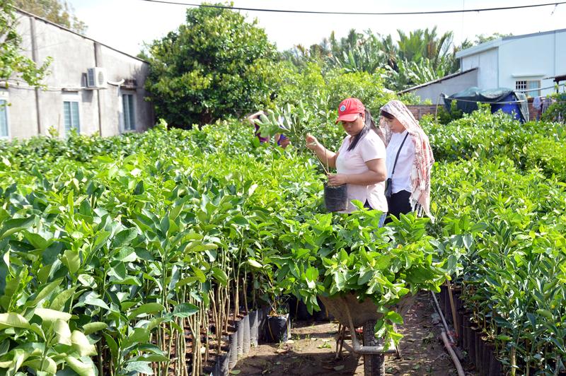 Sản xuất cây giống ở Chợ Lách.