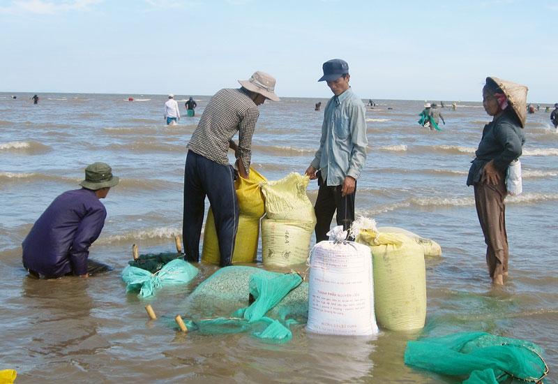 Thu hoạch nghêu giống tại bãi biển Thừa Đức.