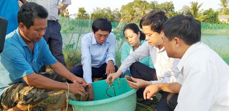 Đoàn công tác của Sở Khoa học và Công nghệ khảo sát mô hình nuôi tôm càng xanh toàn đực xen lúa tại huyện Thạnh Phú. Ảnh: X. Trang