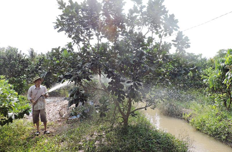 Xã An Phước tập trung hỗ trợ người dân tham gia chuỗi giá trị dừa xiêm xanh và bưởi da xanh.