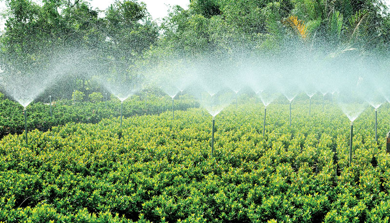 Ứng dụng hệ thống tưới nước phun sương vào sản xuất cây giống. Ảnh: Nguyễn Hải