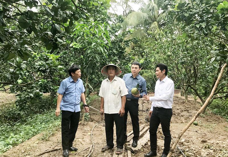 Nông dân Phạm Thành Tri, ấp 3, xã Sơn Đông, tỉnh Bến Tre trình bày thiệt hại của vườn bưởi trước tác động của hạn mặn và khả năng phục hồi khi nhận được sự hướng dẫn từ TT KNQG và Gói hỗ trợ canh tác thuận lợi của Bayer.