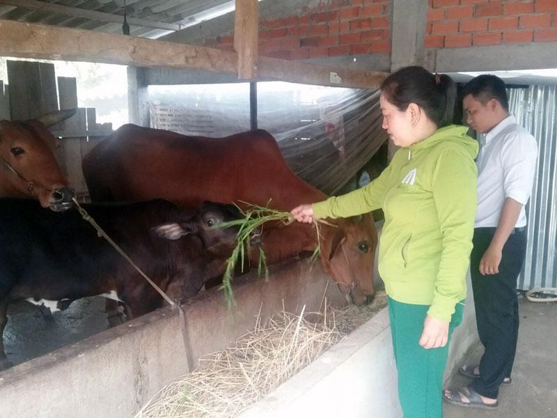 Từ đồng vốn hỗ trợ của đề án, hộ anh Phạm Văn Hải, ấp Hòa Bình, xã Mỹ Hòa chăn nuôi bò, dê và đã thoát nghèo.