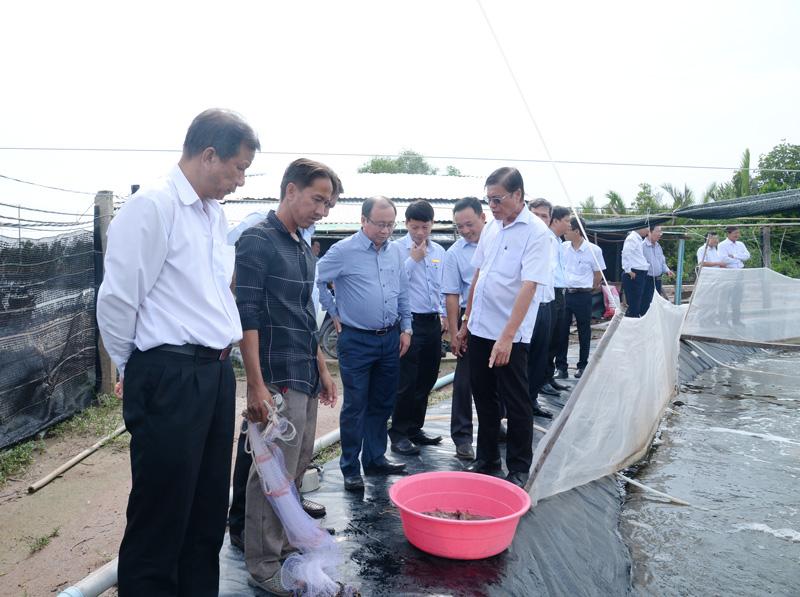 Lãnh đạo 2 huyện Bình Đại - Thạnh Phú tham quan khu nuôi tôm công nghệ cao tại xã Thạnh Phước.