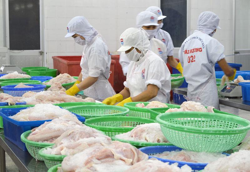 Công ty cổ phần Thủy sản Hải Hương, Khu công nghiệp An Hiệp, huyện Châu Thành chế biến cá xuất khẩu. Ảnh: Cẩm Trúc