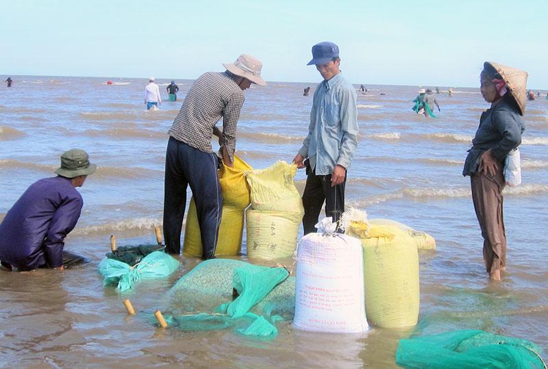 Khai thác nghêu giống tại xã Thừa Đức.