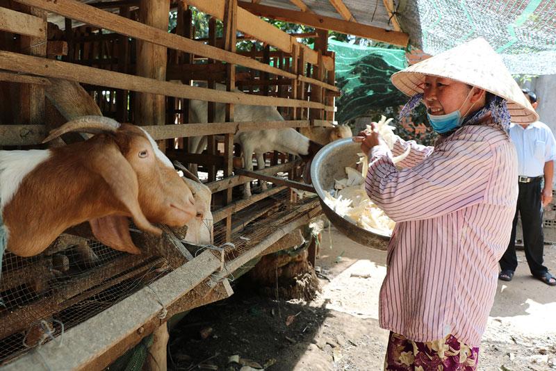 Mô hình chăn nuôi dê giúp nhiều hộ nghèo thoát nghèo.