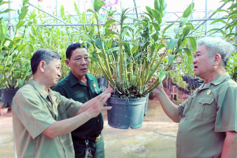 Mô hình tương trợ kinh tế trồng hoa lan ở Khu phố 1, phường Phú Khương giúp nhiều hội viên cựu chiến binh có thu nhập khá.