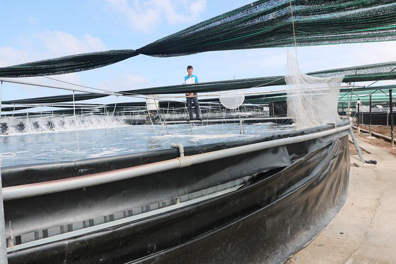 Nuôi tôm biển công nghệ cao 2, 3 giai đoạn trong bể tròn, bể nổi tại xã Thạnh Phước.