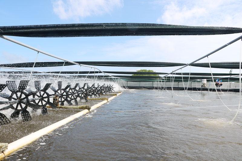 Bể nổi có hệ thống lưới lan che mát, ổn định nhiệt độ nuôi tôm.