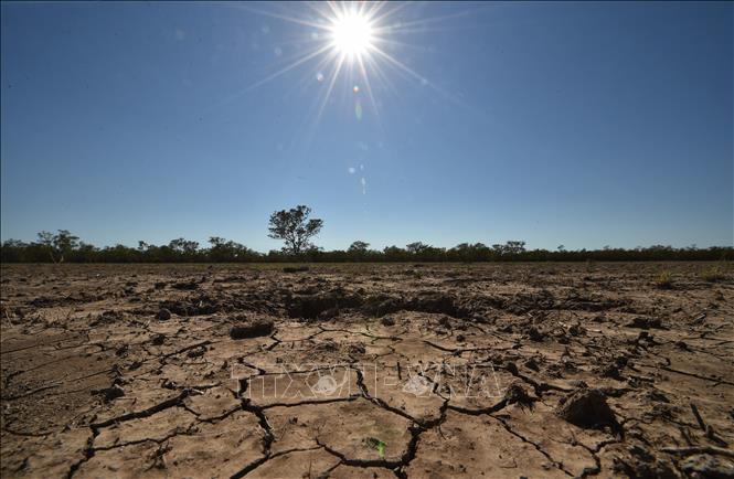 Cảnh khô hạn trên cánh đồng tại thị trấn Walgett, Australia. Ảnh: AFP/TTXVN