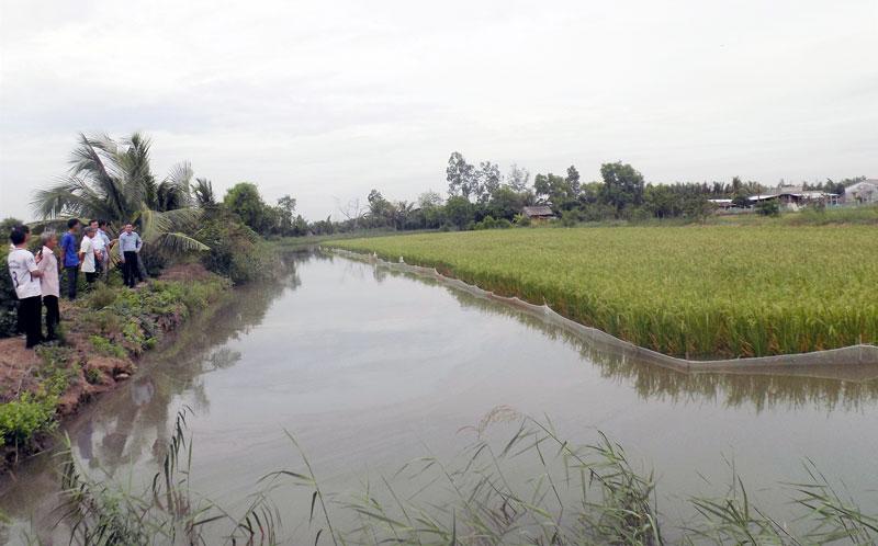 Giống lúa lai thơm 6 trồng thử nghiệm tại xã Mỹ An.