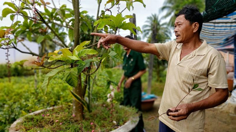 Cựu chiến binh Ngô Văn Đáng, xã Tân Thiềng (Chợ Lách) đang tập trung phát triển kinh tế gia đình sau khi đã thoát nghèo năm 2019.