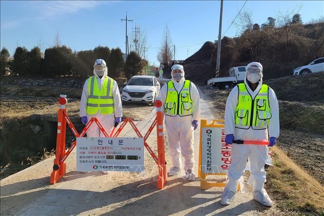 Nhân viên kiểm dịch phong tỏa tuyến đường dẫn vào một trang trại gia cầm ở Eumseong, tỉnh Bắc Chungcheong, Hàn Quốc ngày 8-12-2020, sau khi phát hiện ổ dịch cúm tại đây. Ảnh minh họa: Yonhap/TTXVN