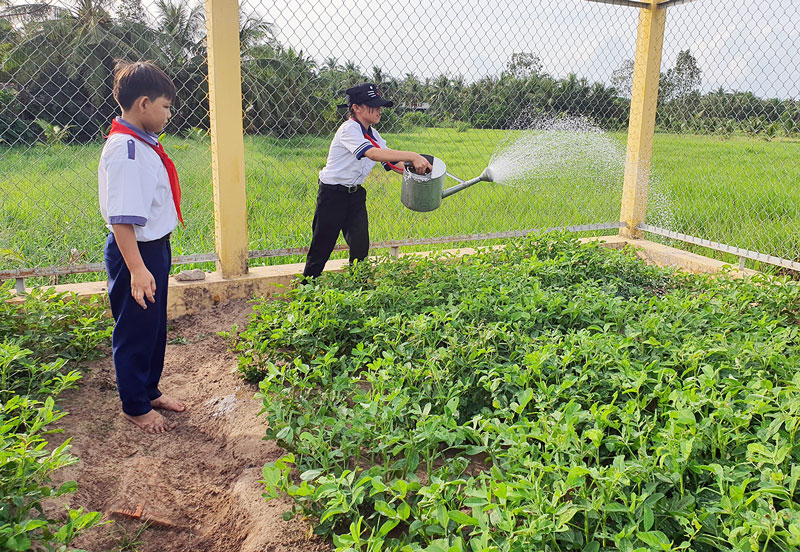 Học sinh Trường THCS An Phú Trung (Ba Tri) tưới ruộng đậu phộng sau giờ học.