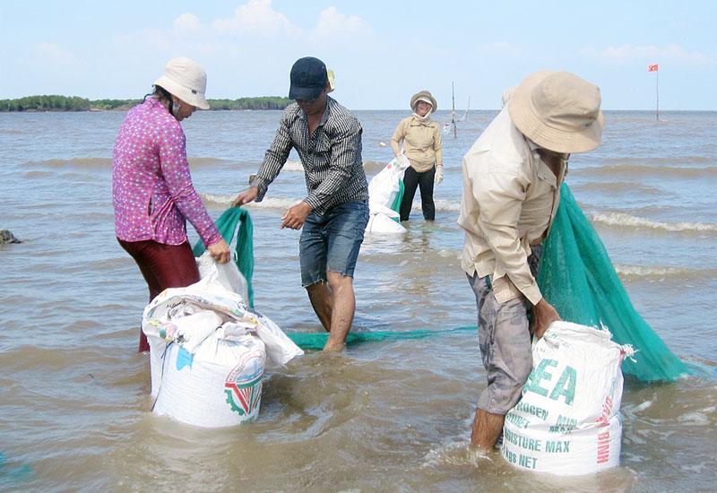 Khai thác nghêu giống tại bãi biển Thừa Đức.