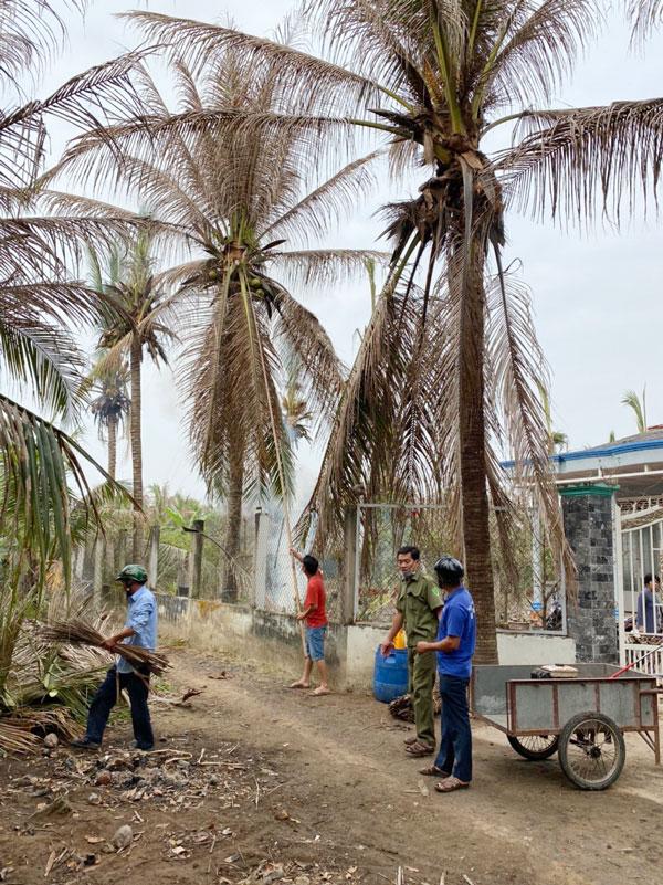 Nông dân Bình Phú xử lý dừa bị sâu đầu đen gây hại.
