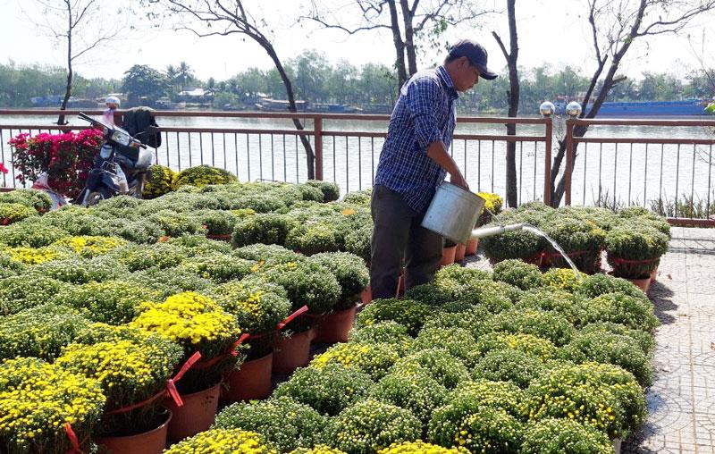 Người dân huyện Mỏ Cày Bắc tham gia kinh doanh hoa kiểng tại Hội hoa xuân Tân Sửu 2021.