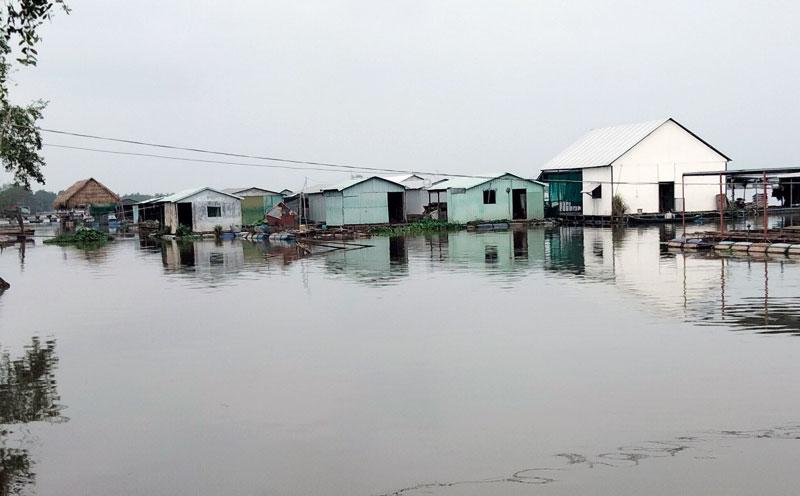 Nghề nuôi cá lồng bè ven sông Tiền ở ấp Phú Mỹ.