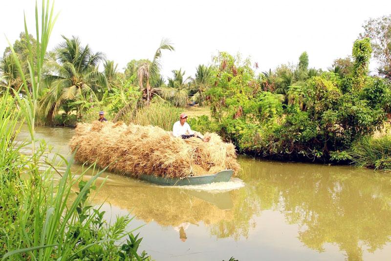 Vận chuyển lúa vừa gặt tại xã Phú Lễ. Ảnh: Nguyễn Sự
