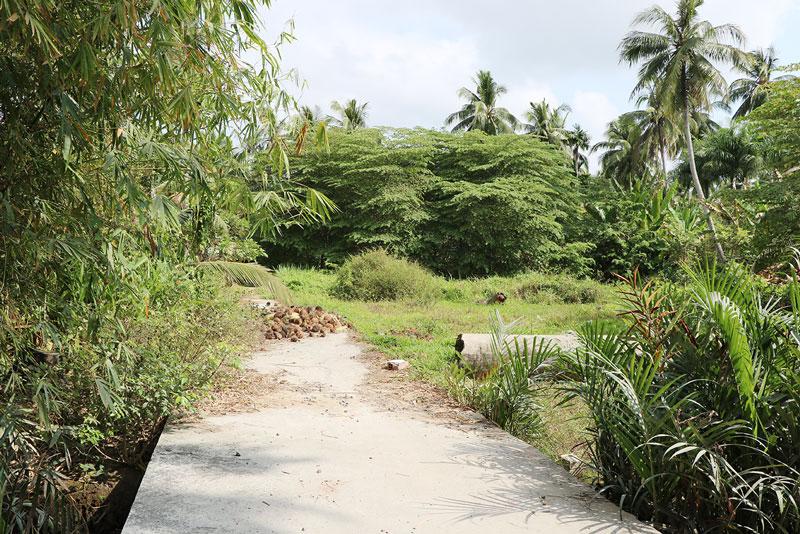 Năm 2020, TP. Bến Tre không còn đất lúa, hầu hết đã chuyển sang đất trồng cây lâu năm, hoặc đất phi nông nghiệp. Ảnh: Phương Khê