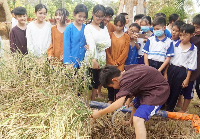Các em học sinh trải nghiệm gặt lúa.