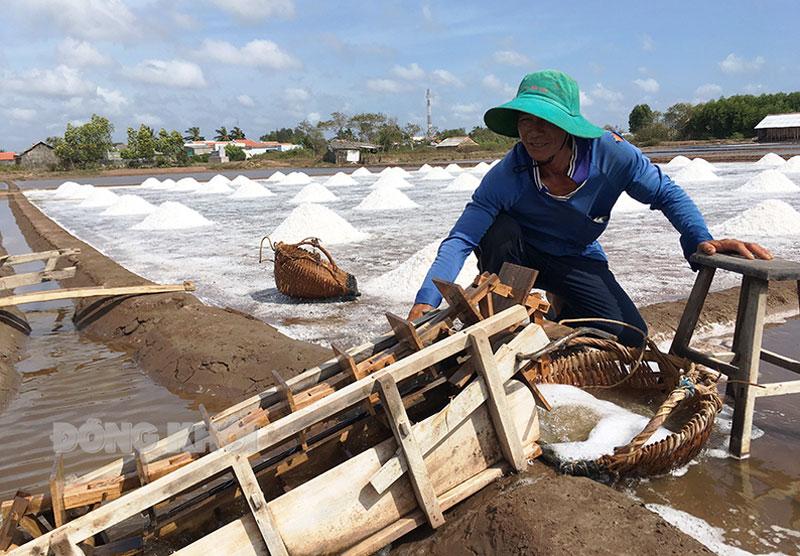 Diêm dân xã Bảo Thuận, huyện Ba Tri thu hoạch muối.