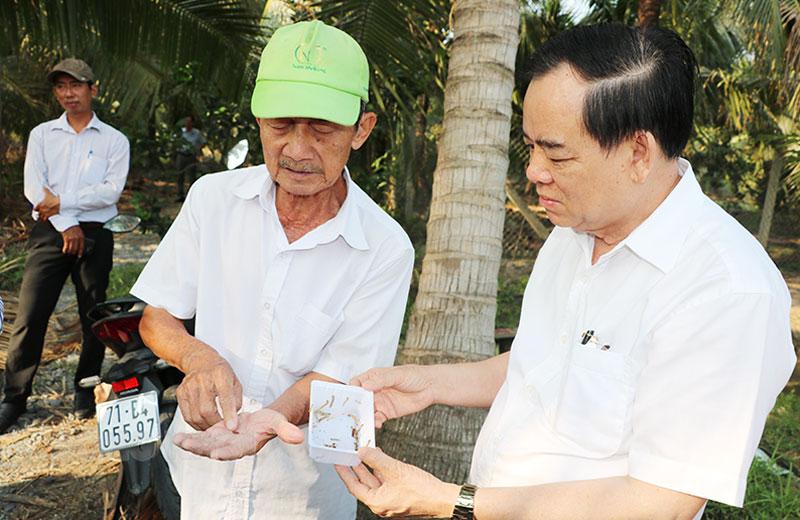 Chủ tịch UBND tỉnh Trần Ngọc Tam (bìa phải) khảo sát vườn dừa sau khi phun thuốc sinh học diệt sâu đầu đen.