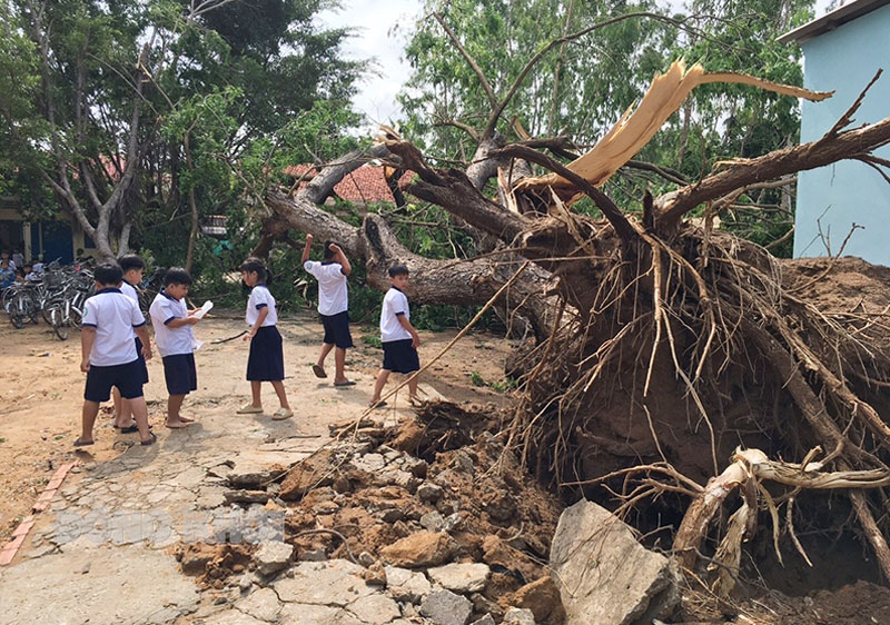 Hiện trường cây me tây bật ngốc ngã đổ.