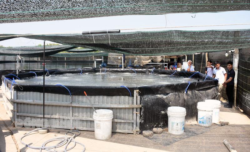 Mô hình nuôi tôm công nghệ cao bể tròn trên cạn đang phát triển mạnh tại Bình Đại. Ảnh: C.Trúc