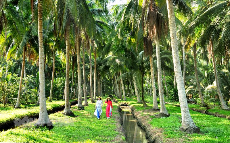 Vườn dừa trên quê hương Đồng Khởi. Ảnh: Nguyễn Hải