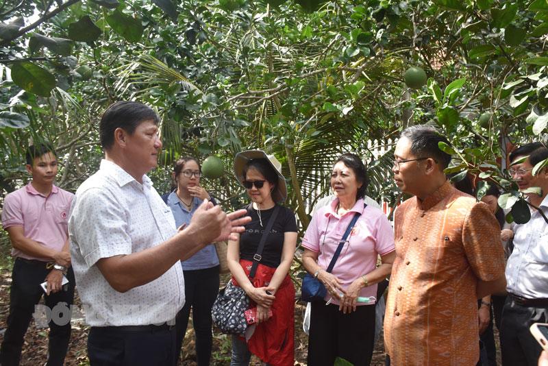 Đoàn thăm tại vườn bưởi ông Huỳnh Văn Quận.