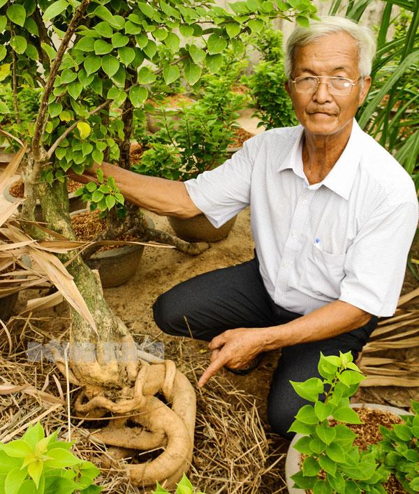 Ông Năm Nhì cho biết cây bông giấy với bộ rễ này sẽ bán được ít nhất 2 triệu đồng.