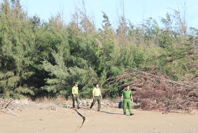 Những cánh rừng phi lao bảo vệ bờ biển ở huyện Thạnh Phú đang dần mất đi do sạt lở bờ biển. Ảnh: T. Thảo
