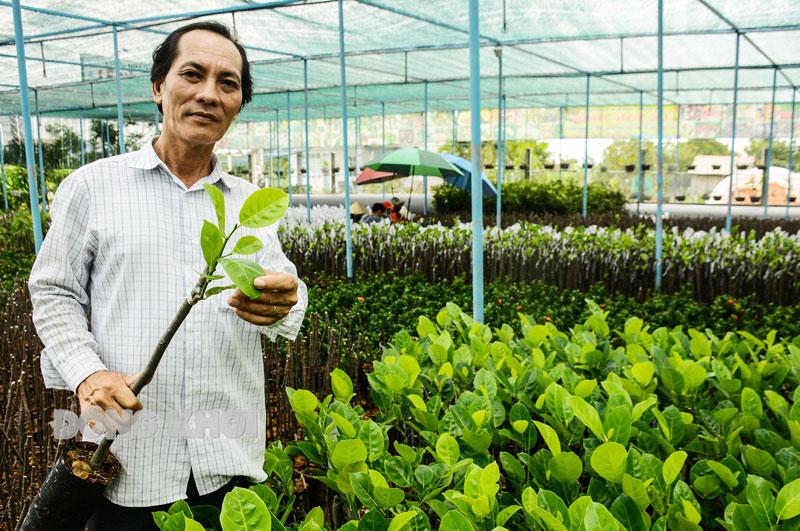 Ông Lê Văn Thảo sản xuất mít ruột đỏ lá bầu (xuất xứ từ Indonesia).
