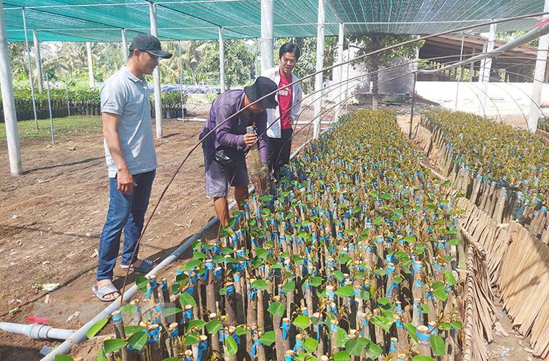 Giới thiệu sản phẩm cây giống cho khách hàng tại Hợp tác xã cây giống Tân Thiềng.