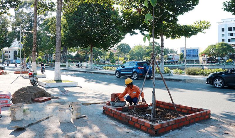 Trồng cây dầu thay thế cây phượng đã bị đốn hạ trên đường Lê Quí Đôn. Ảnh: T. Thảo