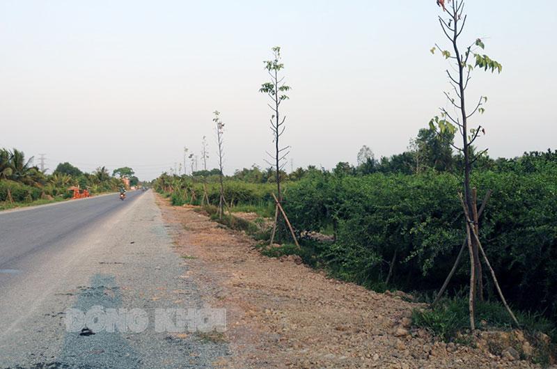 Tập trung trồng cây xanh trên các tuyến đường mới.