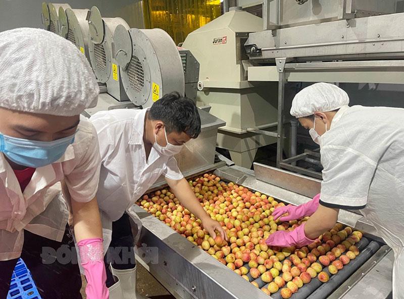 Công ty TNHH XNK Trái cây Chánh Thu xuất khẩu vải thiều Bắc Giang sang Nhật.