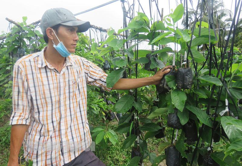 Anh Nguyễn Minh Hậu bên vườn na sầu riêng nhân giống.