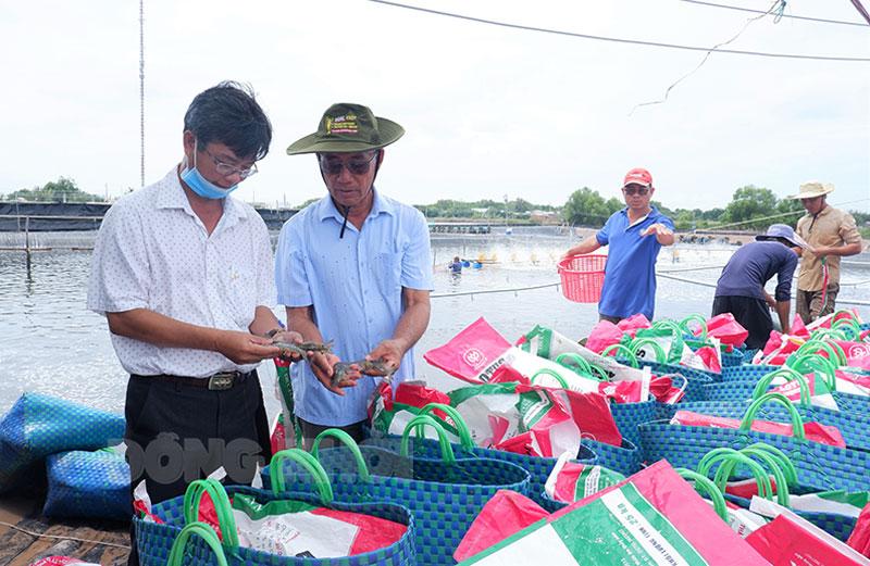 Chủ tịch UBND huyện Đào Công Thương tham quan mô hình nuôi tôm của ông Lê văn Sấm, xã Thạnh Hải. Ảnh: Minh Mừng