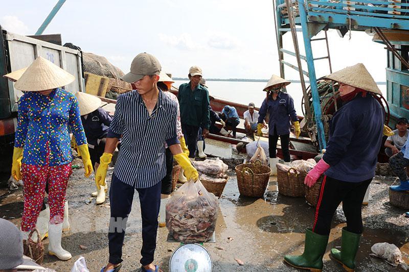 Hoạt động tàu cá tại Cảng cá huyện Bình Đại.