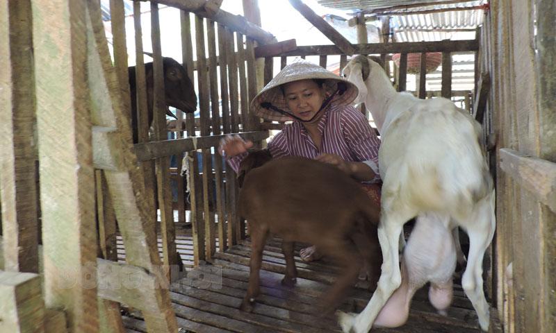 Tham gia Đề án sinh kế, đến nay Châu Thành có 973/1.059 hộ thoát nghèo. Ảnh: Phạm Tuyết