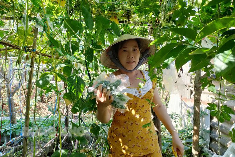 Phụ nữ nông thôn ủ phân hữu cơ trồng rau sạch sử dụng trong gia đình.