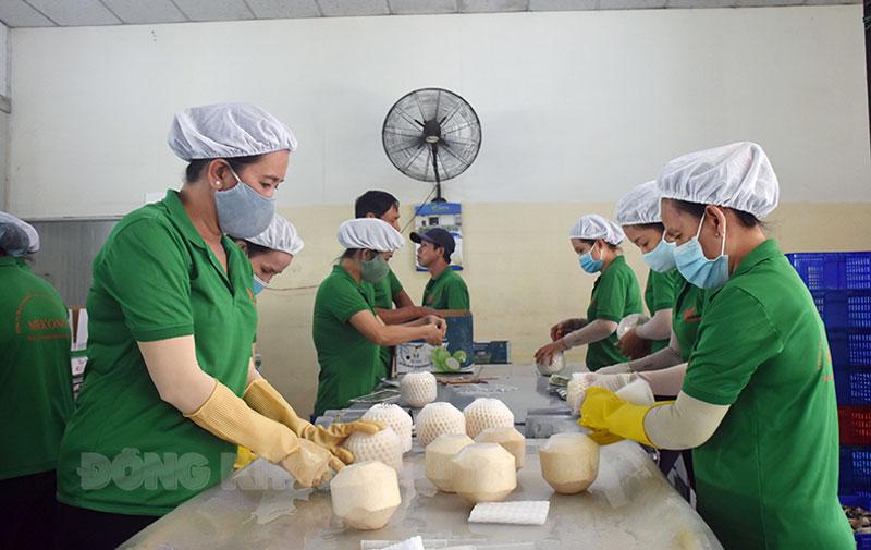 Sơ chế dừa uống nước tại Công ty TNHH Xuất nhập khẩu trái cây Mekong Bến Tre, xã Hữu Định, huyện Châu Thành. Ảnh: Cẩm Trúc