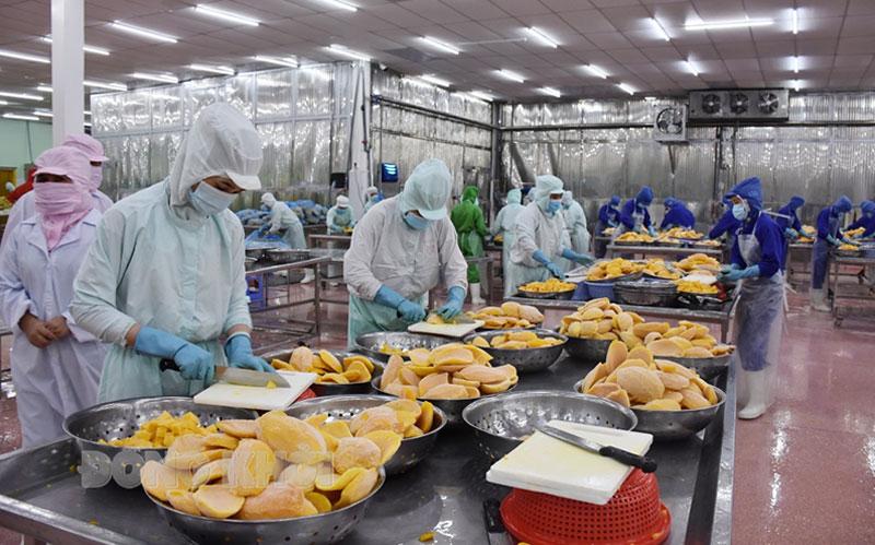 Chế biến nông sản xuất khẩu tại Khu công nghiệp Giao Long, Bến Tre. Ảnh: C. Trúc