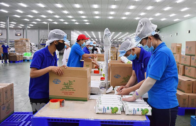 Hỗ trợ khôi phục chuỗi cung ứng nguyên liệu ngành dừa phục vụ cho chế biến và tiêu thụ trong nước và xuất khẩu. Ảnh: Cẩm Trúc