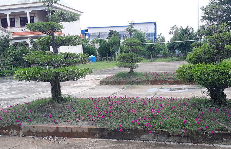 Vườn hoa cây cảnh của đơn vị thường xuyên được Thượng úy Lê Văn Minh chăm sóc.