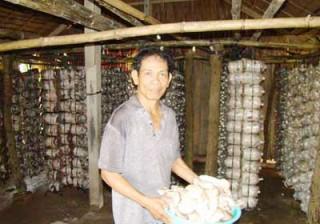 Chuyển giao mô hình trồng nấm bào ngư cho nông dân